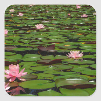 Pink lotus water lily flower pond square sticker
