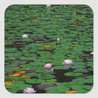 Pink lotus water lily flower pond square stickers