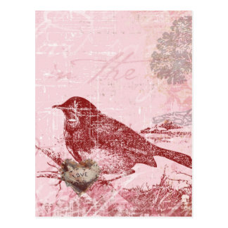 Pink Love Bird Postcard