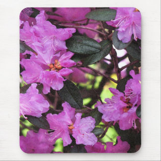 Pink Magenta Purple Rhododendron Garden Flowers Mouse Pad