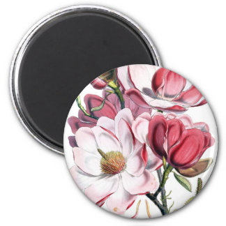 Pink Magnolia Flowers 2 Inch Round Magnet