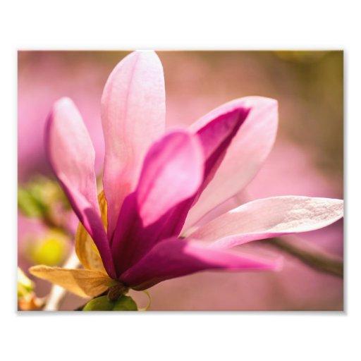 Pink Magnolia Photo Art