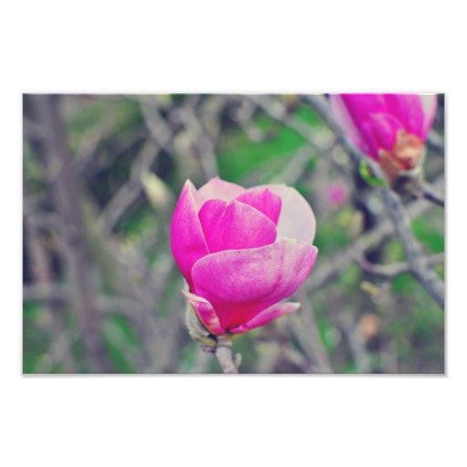 Pink magnolia photo print