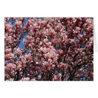 Pink Magnolia Photograph Card