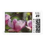 Pink Magnolia Postage