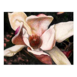 Pink Magnolia Postcard