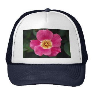 Pink Meidiland (tm) Shrub Rose 'Meipoque' Roses Trucker Hats