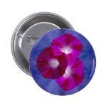 Pink Morning Glory Button