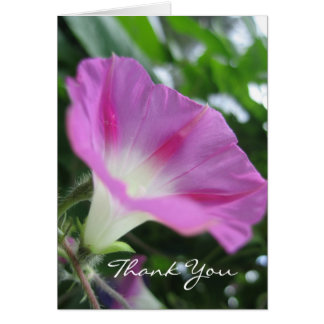 Pink Morning Glory Flower Card