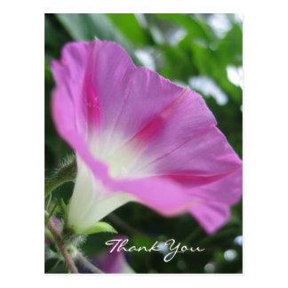 Pink Morning Glory Flower Postcard
