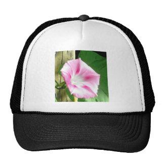 Pink morning glory mesh hats