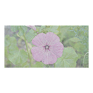 Pink Morning Glory Photo Cards
