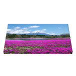 Pink moss and Mt. Fuji in the background Canvas Print