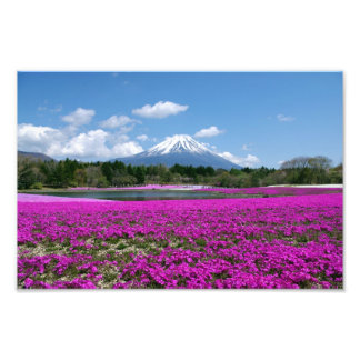 Pink moss and Mt. Fuji in the background Photo Print
