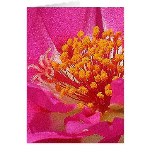 PINK MOSS ROSE greeting card