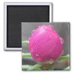 PINK MOSS ROSE magnet