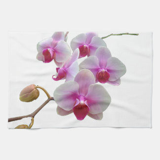 Pink Moth Orchids - Phalaenopsis Kitchen Towels