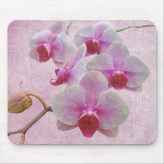 Pink Moth Orchids - Phalaenopsis Mouse Pad
