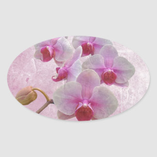 Pink Moth Orchids - Phalaenopsis Oval Sticker