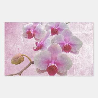 Pink Moth Orchids - Phalaenopsis Rectangular Sticker