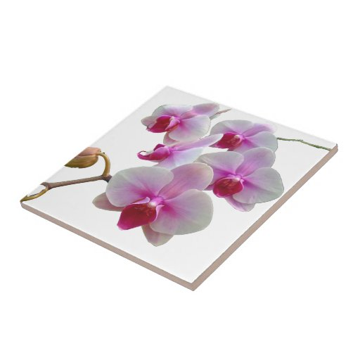 Pink Moth Orchids - Phalaenopsis Small Square Tile