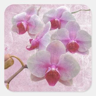 Pink Moth Orchids - Phalaenopsis Square Sticker
