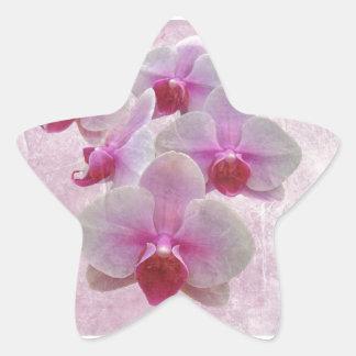 Pink Moth Orchids - Phalaenopsis Star Sticker