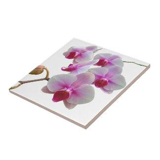 Pink Moth Orchids - Phalaenopsis Ceramic Tile