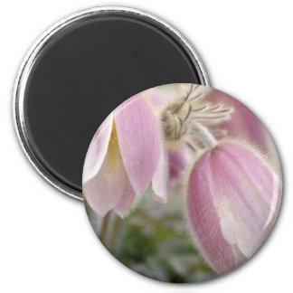 Pink Mountain Anemonae flowers Fridge Magnet