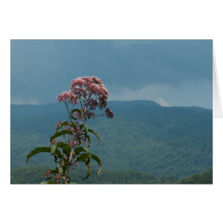 Pink Mountain Flower Card