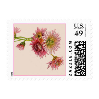 PINK MUMS by SHARON SHARPE Postage Stamp