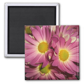 Pink Mums Magnets