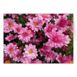 Pink Mums Note Card