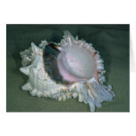 Pink murex (Murex erythrostomus) Shell Greeting Card