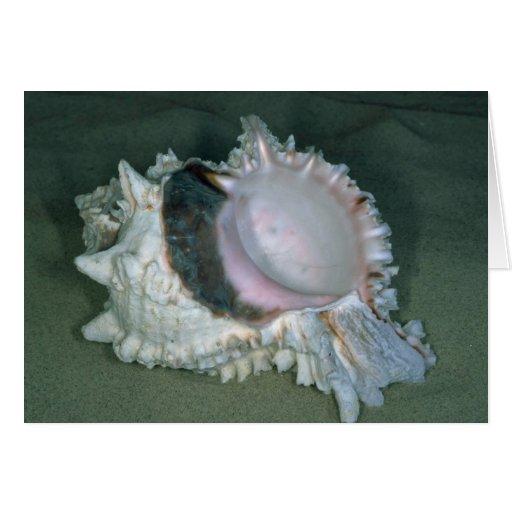 Pink murex (Murex erythrostomus) Shell Greeting Cards