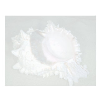 Pink murex (Murex erythrostomus) Shell Letterhead