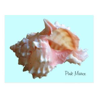 Pink Murex Seashell Postcard