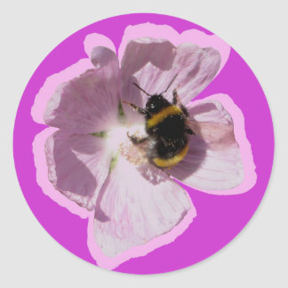 Pink Musk Mallow Flower and bee collecting pollen Classic Round Sticker