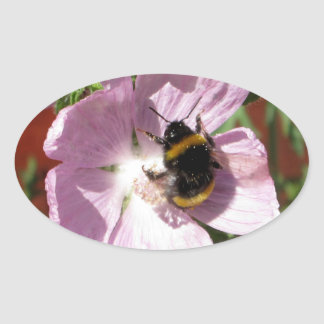 Pink Musk Mallow Flower and bee collecting pollen Oval Sticker