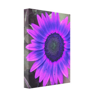 Pink N Purple Sunflower Wrapped Canvas Gallery Wrap Canvas