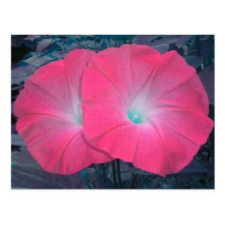 Pink N Teal Morning Glories Postcard