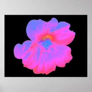 Pink Nasturtium Print