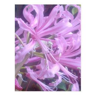 Pink Nerines Postcard