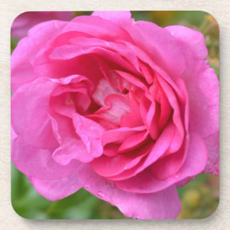 Pink November Rose Coaster Set