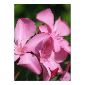 Pink Oleander Blossom 5.5x7.5 Paper Invitation Card