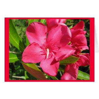 Pink Oleander Greeting Card