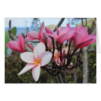 Pink Oleanders Greeting Card