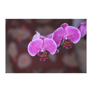 Pink On Pink Flower Canvas Print