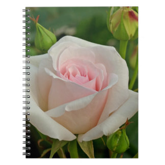 Pink Ophelia Hybrid Rose Note Book
