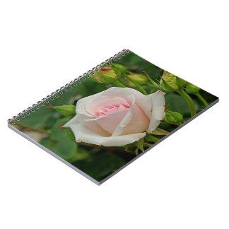 Pink Ophelia Hybrid Rose Spiral Notebook